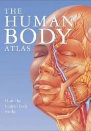 Human Body Atlas: How the Human Body Works
